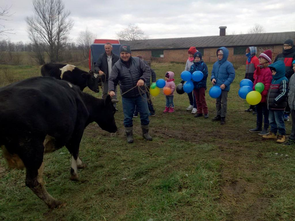kinderen en koeien